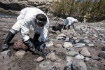 Men collect fuel oil from rocks April 23 following an oil spill along Veneguera beach in Spain's Canary Islands. Few papal encyclicals have been as eagerly awaited as Pope Francis' upcoming statement on the environment. (CNS photo/Borja Suarez, Reuters) See ENCYCLICAL-PLANS April 29, 2015.